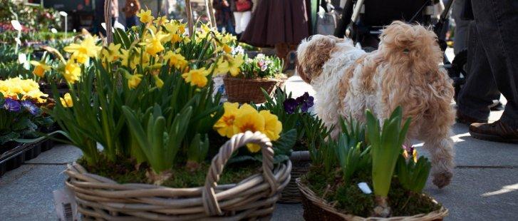 bloemenmarkt_kouter_35